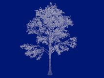 3d rendering of an outlined tree blueprint  on blue back. Ground Royalty Free Stock Image