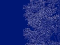 3d rendering of an outlined tree blueprint  on blue back. Ground Stock Photography