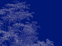 3d rendering of an outlined tree blueprint isolated on blue back. Ground Royalty Free Stock Images