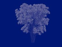 3d rendering of an outlined tree blueprint isolated on blue back. Ground Stock Image