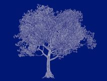 3d rendering of an outlined tree blueprint isolated on blue back. Ground Stock Photo