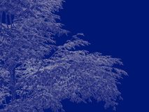 3d rendering of an outlined tree blueprint isolated on blue back. Ground Royalty Free Stock Image