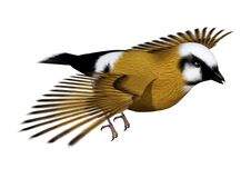 3D Rendering Parson Finch Bird on White. 3D rendering of a parsons finch or black-throated finch bird isolated on white background Stock Images