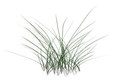 3D Rendering Patch of Grass on White royalty free illustration