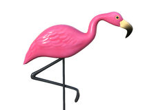 3D Rendering Pink Flamingo on White Stock Photography