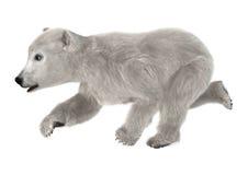 3D Rendering Polar Bear Cub Royalty Free Stock Image