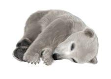 3D Rendering Polar Bear Cub on White Stock Image