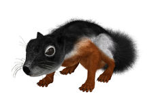 3D Rendering Prevost Squirrel on White. 3D rendering of a Prevost`s squirrel or Asian tri-colored squirrel  isolated on white background Stock Image