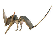 3D Rendering Pteranodon on White Stock Photo