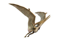 3D Rendering Pteranodon on White. 3D rendering of a prehistoric reptile Pteranodon isolated on white background Stock Photo
