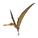 3D Rendering Pterodactyl Anhanguera on White Stock Images