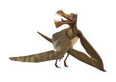 3D Rendering Pterodactyl Anhanguera on White Stock Photography