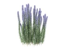 3d rendering of a realistic flower bush from front  view isolate Stock Photos