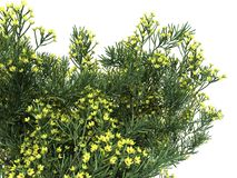 3d rendering of a realistic flower bush from front view isolate. D on white vector illustration