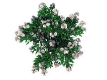 3d rendering of a realistic green top view flower bush isolated. 3d rendering of a realistic green top view tree isolated on white royalty free illustration