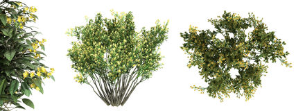 3d rendering of a realistic green top view tree isolated on whit. E Stock Photos