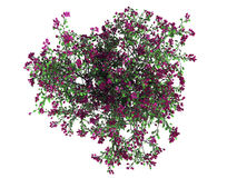 3d rendering of a realistic green top view tree isolated on whit. E Royalty Free Stock Photos