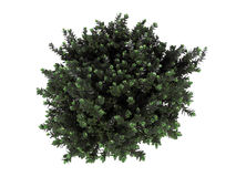 3d rendering of a realistic green top view tree isolated on whit. E Stock Photography