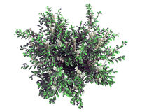 3d rendering of a realistic green top view tree isolated on whit. E Royalty Free Stock Images