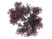 3d rendering of a realistic green top view tree isolated on whit. E Royalty Free Stock Photography