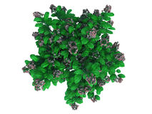 3d rendering of a realistic green top view flower bush isolated Royalty Free Stock Images