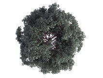 3d rendering of a realistic green top view tree isolated on whit. E Stock Image