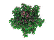 3d rendering of a realistic green top view tree isolated on whit. E vector illustration