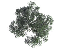 3d rendering of a realistic green top view tree isolated on whit. E Royalty Free Stock Image
