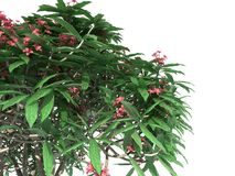 3d rendering of a realistic green tree foreground view isolated. On white stock illustration
