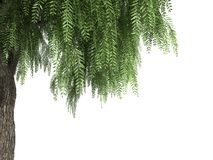 3d rendering of a realistic green tree foreground view isolated. On white royalty free illustration