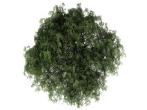 3d rendering of a realistic green tree top view isolated on whit. E Stock Images