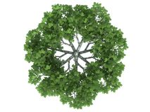 3d rendering of a realistic green tree top view isolated on whit. E Stock Photos