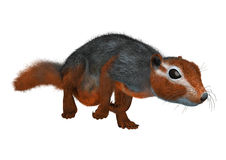 3D Rendering Red Bush Squirrel on White Royalty Free Stock Photos