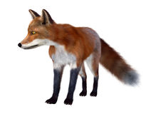 3D Rendering Red Fox on White Stock Photos