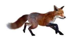 3D Rendering Red Fox on White Stock Images
