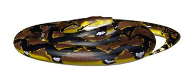 3D Rendering Reticulated Python on White. 3D rendering of a Reticulated python or Python reticulatus, a species of python found in Southeast Asia, isolated on Royalty Free Stock Image