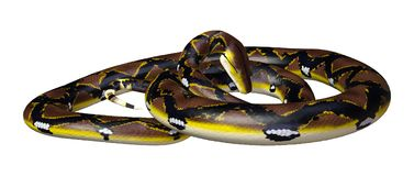 3D Rendering Reticulated Python on White. 3D rendering of a Reticulated python or Python reticulatus, a species of python found in Southeast Asia, isolated on Stock Photo