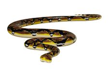 3D Rendering Reticulated Python on White Royalty Free Stock Images