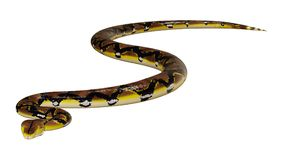 3D Rendering Reticulated Python on White Royalty Free Stock Image