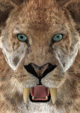 3D Rendering Saber Toothed Ttiger or Smilodon. 3D rendering of a head of a saber-toothed tiger or smilodon, closeup Royalty Free Stock Photo