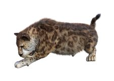 3D Rendering Sabertooth Tiger on White. 3D rendering of a sabertooth tiger isolated on white background Royalty Free Stock Image