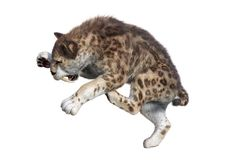 3D Rendering Sabertooth Tuger on White. 3D rendering of a sabertooth tiger isolated on white background Royalty Free Stock Image