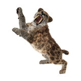 3D Rendering Sabertooth Tuger on White Royalty Free Stock Photo