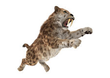 3D Rendering Sabertooth Tuger on White Royalty Free Stock Photography