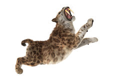 3D Rendering Sabertooth Tuger on White Stock Images