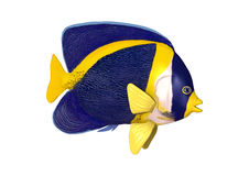3D Rendering Scribbled Angelfish on White Royalty Free Stock Image