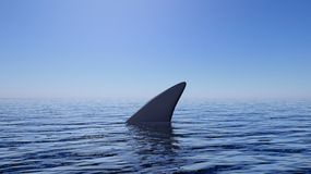 3D rendering of shark fin above water Royalty Free Stock Images