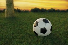 3d rendering of soccer ball on green grass in the evening sunset.  Royalty Free Stock Image