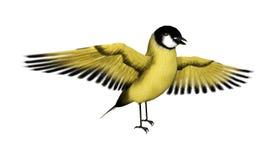 3D Rendering Songbird Goldflinch on White. 3D rendering of a songbird goldfinch isolated on white background Stock Photo