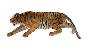 3D Rendering Tiger on White Stock Photography